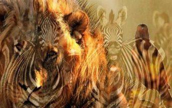 Ce animal ai văzut mai întâi? Acest lucru poate spune multe despre tine